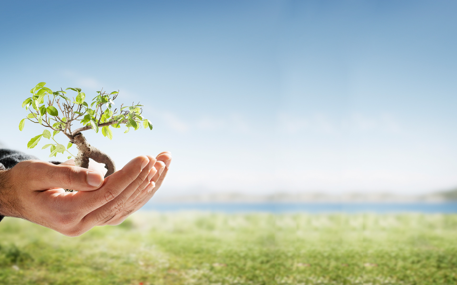 Common sense things to do to reduce your carbon footprint